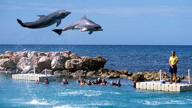 kid-friendly-jamaica-dolphin-cove.rend.tccom.616.347